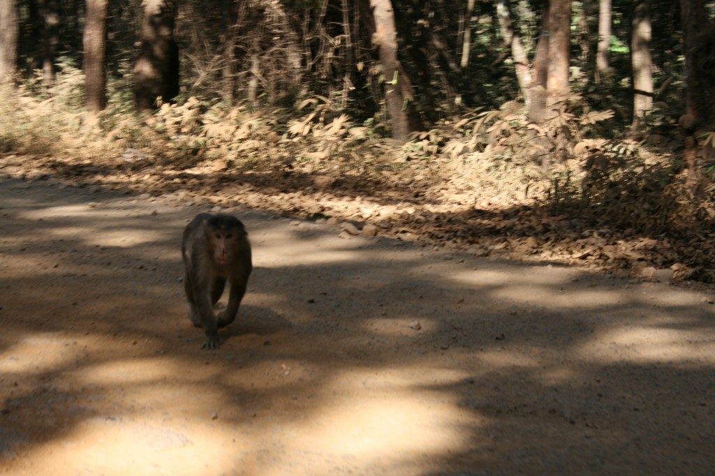 monkeys along the route - very cheeky