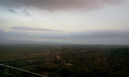 endless olive plantations
