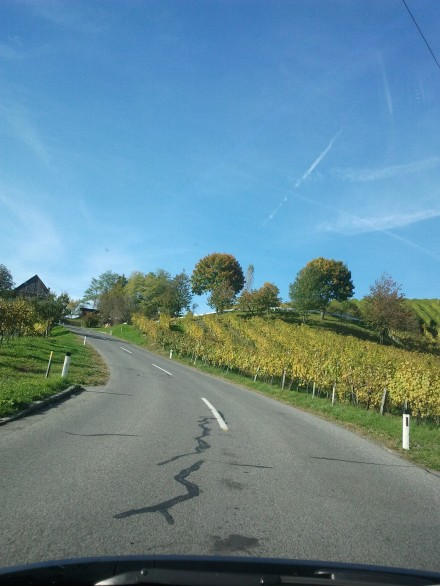 more wine - especially beautiful in autumn with yellow leaves