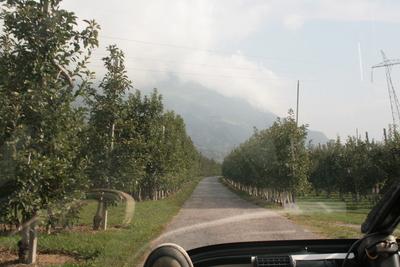 endless apple trees