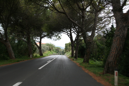slovenia: pine trees along the road