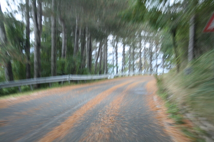 pine tree needles - very slippery road when wet
