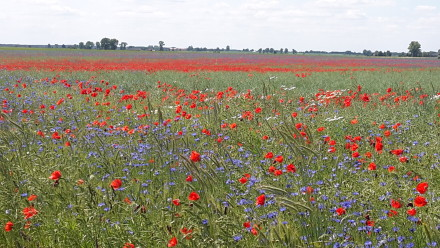flowers in rural poland