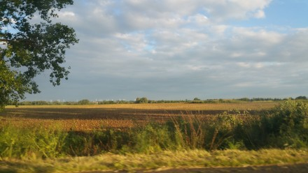 sun bathed fields
