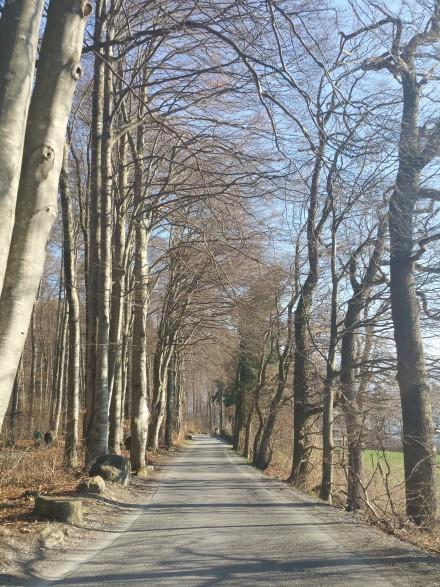 Autumn or Spring - last few km towards Malans