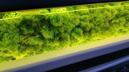 Moss close-up
