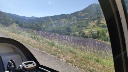 Lavender fields in southern France