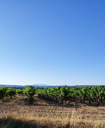 "mile after mile of wine along the ""cotes du rhone"""