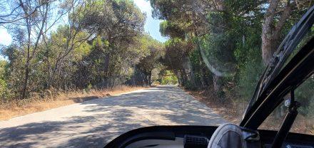 Beautiful back roads with pine treas
